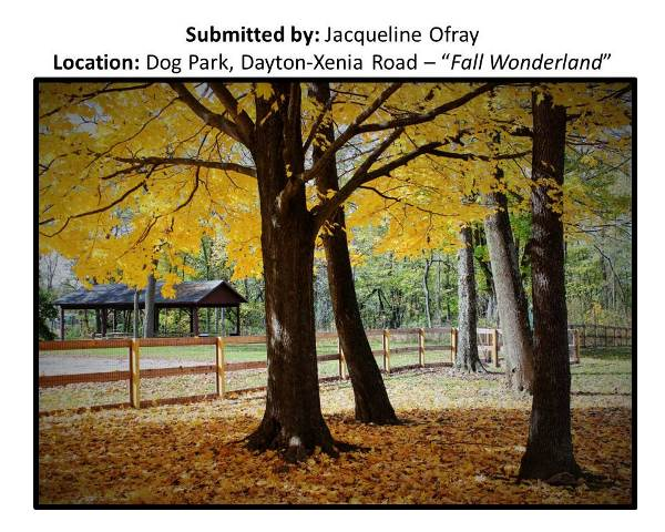 Submitted by Jacqueline Ofray at Dog Park, Dayton-
